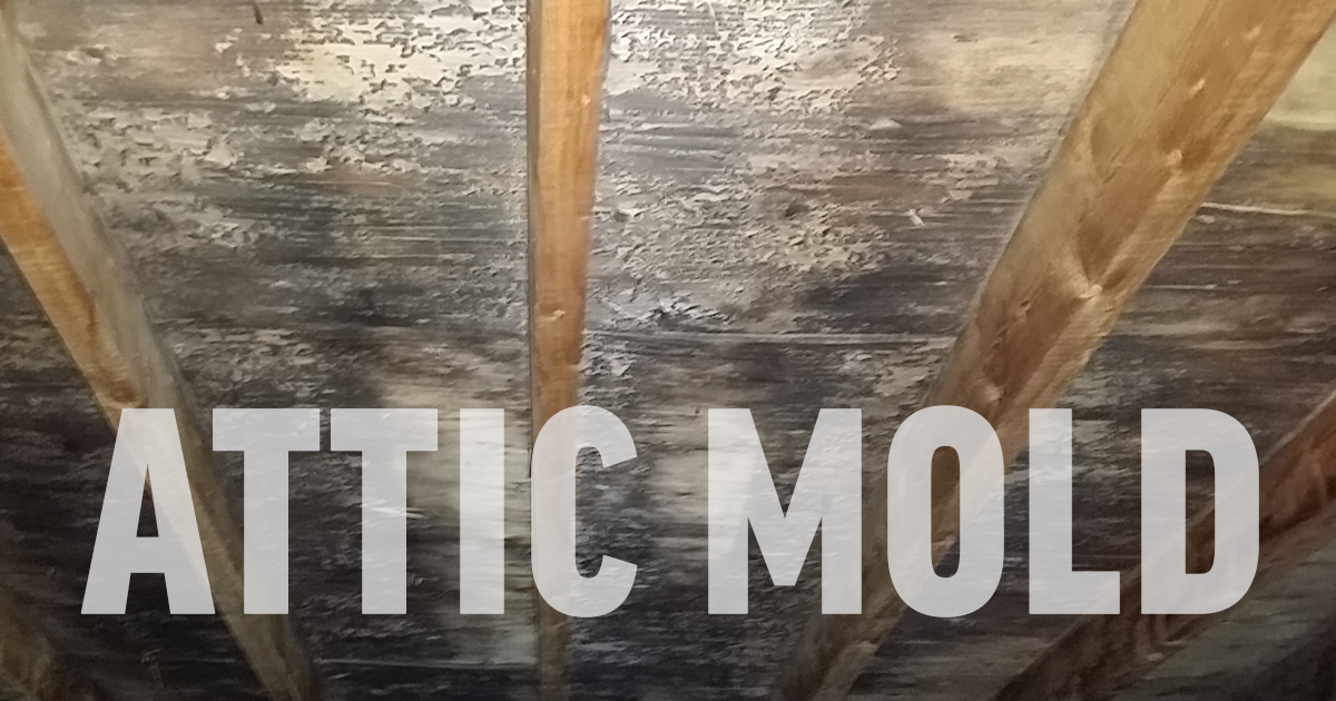 Attic Mold Removal Services Near Me