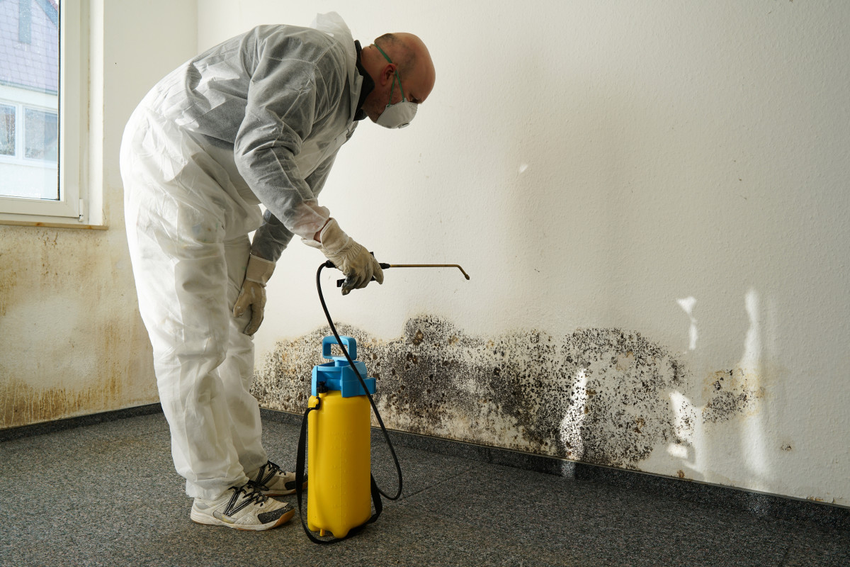 Mold Remediation in the Workplace.