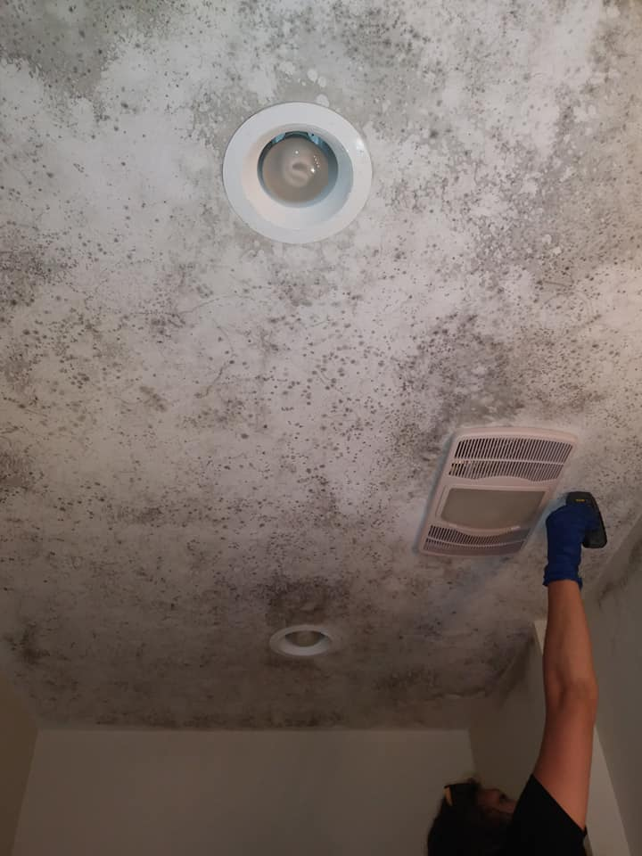 Mold Remediation Near Me - Leave It To The Professionals
